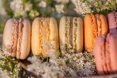 Pastelarias francesas Macarons dos doces da sobremesa e flores brancas do prado na noite do ver?o no pomar imagens de stock