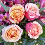 Pastelkleur Rose Bridal Bouquets Stock Afbeeldingen