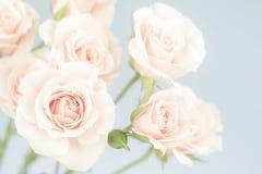 Pastelkleur roze rozen, gedempte kleuren Stock Foto