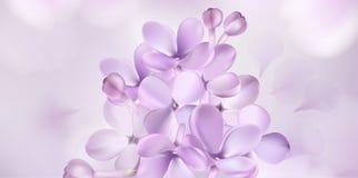 Pastelkleurachtergrond met lilac bloemen Stock Afbeelding
