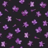 Pastelkleurachtergrond met lilac bloemen Stock Fotografie