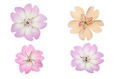 Pastelkleurbloemen Stock Foto