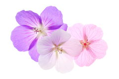 Pastelkleurtrio Royalty-vrije Stock Foto's