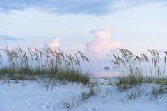 Pastelkleurzonsondergang bij het Strandscène van Florida met Overzeese Haver en Zachte Colo stock foto's