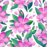 Pastell färgad modell av oleanderblommor royaltyfri illustrationer