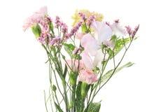 Pastell-färgade blommor royaltyfria bilder
