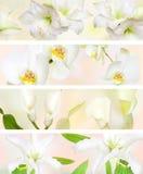 pastell för blomma för banerfärg dekorativ Arkivfoto
