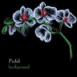 Pastell för teckningen för vektorillustrationen chalks handgjord blom- backgr stock illustrationer
