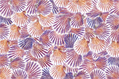 Pastell--Meer-SHELL-Hintergrund Stockbild