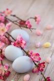 Pastellblått färgade påskägg och gelébönor med Cherry Blos Arkivbild