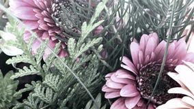 Pastellblumenanzeige, Youtube-Kanal Art Banner Lizenzfreies Stockbild