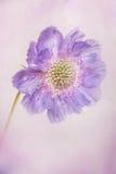 Pastellblumenblätter Lizenzfreies Stockfoto