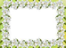Pastellfärgad bakgrund med förgrena sig av Sakura Royaltyfri Bild