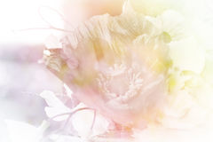 Pastellfärgad mjuk blomma Arkivbilder