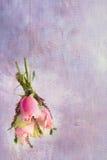 Pastellfärgad stilleben med rosor fotografering för bildbyråer