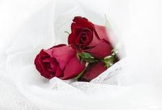 Pastellfärgade rosor royaltyfri bild