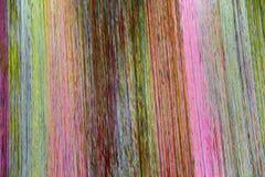 Pastellfärgade skuggor av rosa färg- och gulingsignaler Fotografering för Bildbyråer