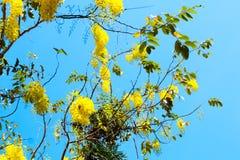 Pastellfarbe der goldenen Blume der Weinlese Duschzum kreativen Muster stockfoto