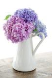 Pastellfarbhortensieblumen Stockfoto
