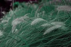 Pastellfärgat gräs Arkivfoto