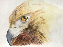 Pastelli di Eagle su cartone Fotografie Stock Libere da Diritti