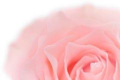 Pastellrosa Rosen-Nahaufnahme Stockfotografie