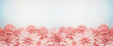 Pastelowa menchia kwitnie sztandar lub granicę na mlecznoniebieskim tle, odgórny widok Kwiecisty układ Obraz Stock