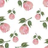 Pastelowa ręka rysować akwareli menchie kwitną bezszwowego Zdjęcia Royalty Free