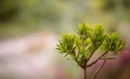 Pastelowa roślina obraz royalty free