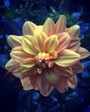 Pastelowy los angeles Fluer Zdjęcia Royalty Free