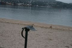 Pastenague par la mer Photo libre de droits