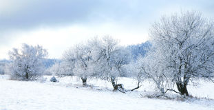 Pasterka village in snow – winter in Poland Stock Photography