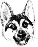 Pasterski psiej głowy portret charakter grafika, ikona, waterco ilustracji