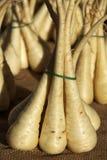 Pastinacas Foto de archivo libre de regalías