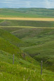 Pasto 1 de la pradera Imagen de archivo