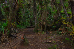 PASTO, COLÔMBIA - 3 DE JULHO DE 2016: a ilha do cotora do la é o parque nacional o menor em Colômbia e é ficada situada no cocha  Imagens de Stock Royalty Free