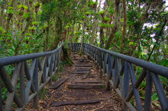 PASTO, COLOMBIA - 3 DE JULIO DE 2016: pequeño camino rodeado por muchos árboles situados en la isla del cotora del la en el lago  Foto de archivo libre de regalías