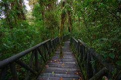 PASTO, COLOMBIA - JULY 3, 2016: la cotora national nature park is the smalles national nature park in colombia.  royalty free stock images