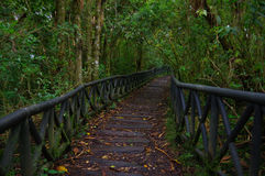 PASTO, COLOMBIA - JULY 3, 2016: nice path in the middle of the jungle located in la cotora island Stock Photo
