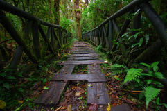 PASTO, COLOMBIA - JULY 3, 2016: small path with some wood steps on the ground on the middle of the jungle.  Royalty Free Stock Images