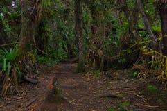 PASTO, COLOMBIA - 3 LUGLIO 2016: l'isola di cotora della La è il più piccolo parco nazionale in Colombia ed è situata in cocha de Immagini Stock Libere da Diritti
