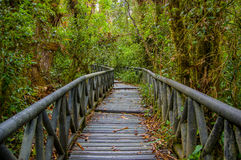 PASTO, COLOMBIA - 3 LUGLIO 2016: percorso di legno piacevole in mezzo alla giungla Immagini Stock