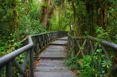 PASTO, COLOMBIE - 3 JUILLET 2016 : petit chemin en bois au milieu d'île de cotora de La Photos stock