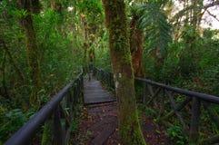 PASTO, COLOMBIE - 3 JUILLET 2016 : quelques arbres se tenant au milieu du chemin en bois en île de cotora de La Photos stock