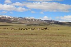 Pasto da montanha Fotos de Stock Royalty Free