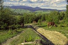 Pasto da montanha Imagens de Stock