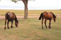 Pasto 6 da montanha de Quirguizistão imagens de stock royalty free