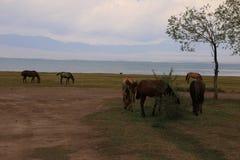 Pasto 5 da montanha de Quirguizistão fotos de stock