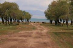 Pasto 4 da montanha de Quirguizistão fotos de stock royalty free