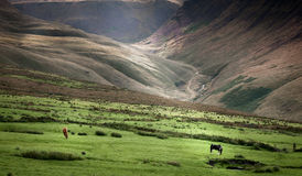 Pasto de caballos Imagen de archivo libre de regalías